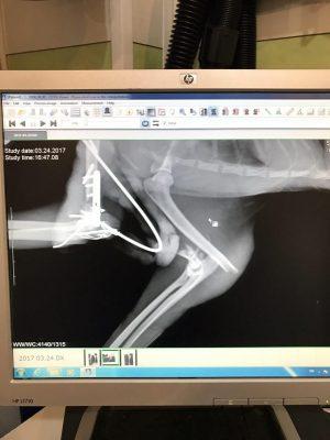 ESF نوعي فيكس كردن استخوان از خارج بدن