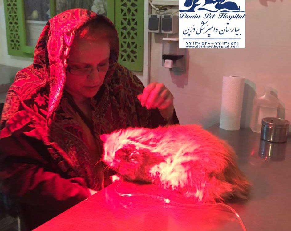 درمان التهاب دستگاه گوارش گربه در دامپزشکی درین