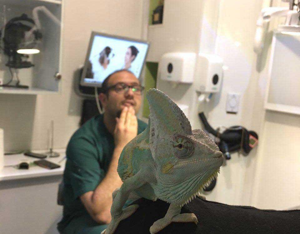 درمان رنگ پوست وایگوانا در دامپزشکی